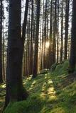 Gran solnedgång, januari, mossa, siluette, jordning, gräsplan, lodlinje Arkivfoto