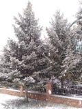 Gran som sopas av snö arkivbild