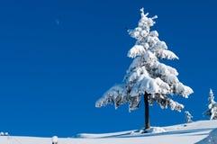 Gran som täckas med insnöad vinter Arkivbilder