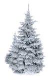 Gran som täckas med snö som isoleras på vit bakgrund Arkivbild