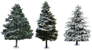 Gran som täckas med snö som isoleras på vit bakgrund Royaltyfri Fotografi
