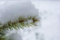 Gran täckte vid ny snö royaltyfria foton