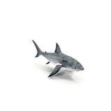 Gran tiburón blanco en el fondo blanco Foto de archivo libre de regalías