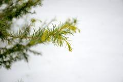 Gran-träd barnvisare Arkivfoto
