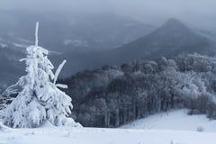 Gran-träd i bergmaximum i vinter med snö Fotografering för Bildbyråer