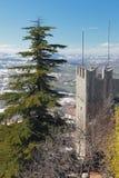Gran-träd och medeltida torn i berg marino san Arkivbild