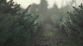 Gran-träd trädgård under regnet stock video