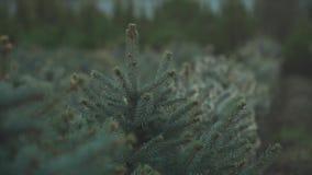 Gran-träd trädgård under regnet arkivfilmer