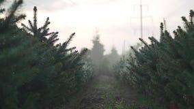 Gran-träd trädgård under regnet lager videofilmer