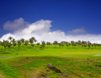 Gran trawa golfowa zielona Canaria Meloneras Zdjęcie Stock
