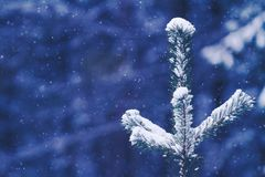 Gran under snö, bakgrund för nytt år som tonas och filtreras Royaltyfri Foto