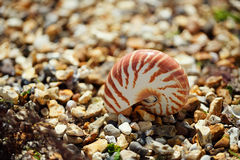 Gran verano británico Pebble Beach con la cáscara del mar Imagen de archivo