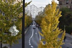 Gran Via de Granada com o biloba amarelo da nogueira-do-Japão do outono fotografia de stock