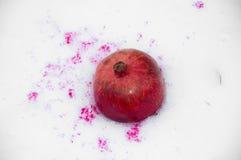 Granaatappel in de sneeuw Stock Afbeelding
