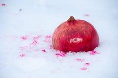 Granaatappel in de sneeuw Royalty-vrije Stock Afbeeldingen