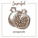 Granaatappel in halve zwart-wit superfoodsepia schets wordt gesneden die royalty-vrije illustratie
