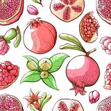 Granaatappel naadloos patroon, fruit en aardornament royalty-vrije illustratie