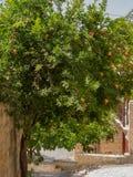 Granaatappel tegen de achtergrond van de oude straat Stock Foto's