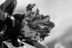 Granaatappel in zwart-wit Stock Afbeeldingen