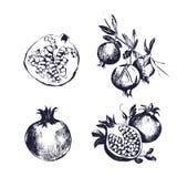 Granaatappelhand getrokken reeks Inzameling op witte achtergrond, geïsoleerd fruitgeheel, schema, op een tak EPS 10 Stock Afbeeldingen