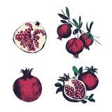 Granaatappelhand getrokken reeks Inzameling op witte achtergrond, geïsoleerd fruitgeheel, schema, op een tak Kleurrijke vector Stock Afbeelding