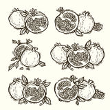 Granaatappels linocut Royalty-vrije Stock Foto's