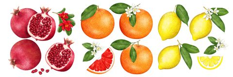 Granaatfruit, Grapefruit en Citroen met de helften en bloemen op witte achtergrond Citrusvruchtenreeks Geschilderde illustratie stock illustratie