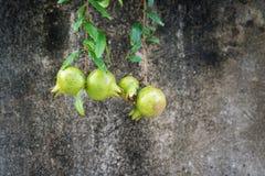 Granada contra fondo áspero de la pared del cemento Imagen de archivo libre de regalías