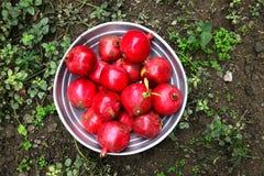 Granadas deliciosas maduras rojas Imagen de archivo libre de regalías