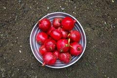 Granadas deliciosas maduras rojas Foto de archivo libre de regalías