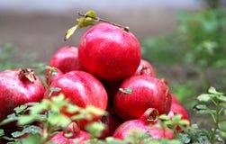 Granadas deliciosas maduras rojas Foto de archivo