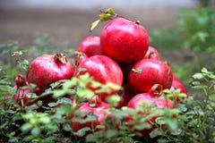 Granadas deliciosas maduras vermelhas Imagens de Stock