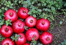 Granadas deliciosas maduras vermelhas Fotografia de Stock
