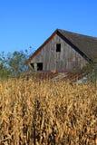 Granai di Midwest Fotografia Stock