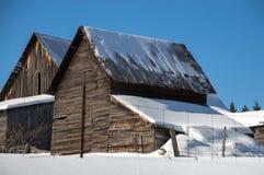 Granai di Snowy nel sole in Ontario nordico Fotografie Stock