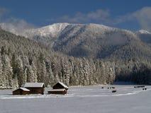 Granai, mucche e montagne dello Snowy Immagini Stock
