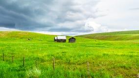 Granai nelle superfici a pascolo di Nicola Valley in Columbia Britannica, Canada Immagine Stock Libera da Diritti