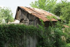 granaio abbandonato grigio con un tetto arrugginito dietro un recinto invaso con vegetazione verde immagine stock