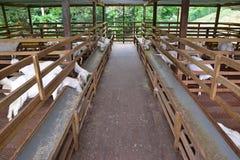 Granaio bianco di legno dell'azienda agricola della capra Fotografie Stock Libere da Diritti