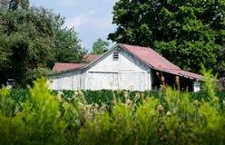 Granaio bianco stagionato in un frutteto del Michigan Fotografie Stock Libere da Diritti