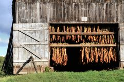 Granaio del tabacco fotografie stock libere da diritti
