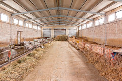 Granaio delle pecore con paglia Immagine Stock