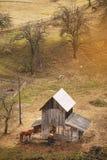 Granaio di legno e due cavalli Fotografie Stock Libere da Diritti