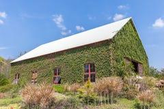 Granaio di legno naturale con la parete esterna della pianta verde nel agricultur Fotografia Stock