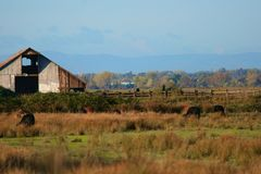 Granaio di legno sull'azienda agricola Fotografie Stock