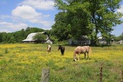 Granaio di Rusitic nel Tennessee rurale immagine stock libera da diritti