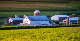 Granaio e casa su un'azienda agricola nella contea di York rurale, PA fotografie stock libere da diritti