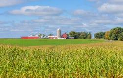 Granaio e costruzioni rossi con la priorità alta del campo di grano Fotografia Stock Libera da Diritti