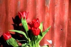 Granaio e tulipani Immagine Stock Libera da Diritti