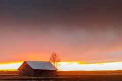 Granaio e un albero di betulla contro il tramonto drammatico Immagine Stock